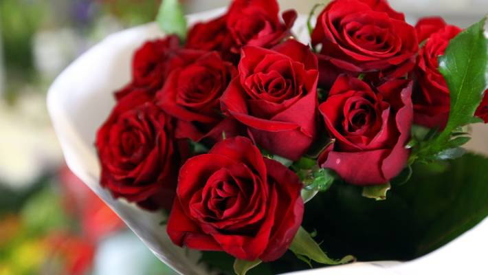 Interesting Facts that You Should Know About Roses